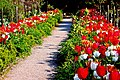 Glenveagh National Park - Flowers in Walled Garden - geograph.org.uk - 1189246.jpg