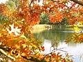 Goldener Oktober - geo.hlipp.de - 29280.jpg