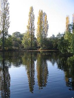 Goose Pool, Brandon Marsh - geograph.org.uk - 592376