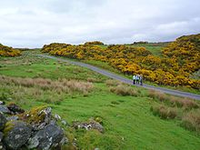Gorse on a hill, near Oban.jpg