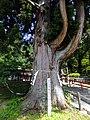 Gozanoishi-jinja 006.jpg