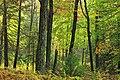 Gravel Family Nature Preserve (12) (30260102142).jpg
