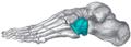 Gray291- Cuboid bone.png