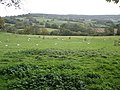 Grazing sheep, on Mortimers Farm - geograph.org.uk - 1021903.jpg