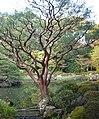 Green Dragon Pond 青龍池 - panoramio.jpg