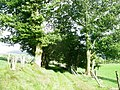 Green lane above Rhydymain - geograph.org.uk - 545372.jpg