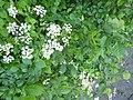 Greenwood forest farming 06.JPG