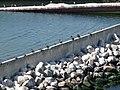 Grenaa harbour 2018 5.jpg