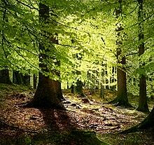 Лиственный лес в дании