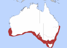 Common distribution for flake in southern Australia