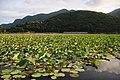 Hồ nước ngọt Côn Dảo - panoramio.jpg