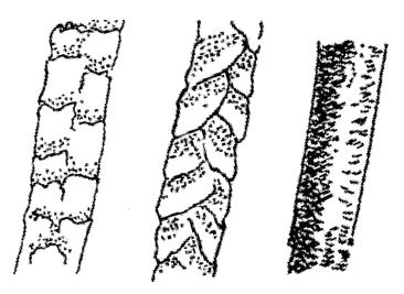 Haare-kutikula