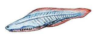 <i>Haikouichthys</i> extinct genus of craniate