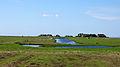 Hallig Hooge BSR Schleswig-Holsteinisches Wattenmeer und Halligen.jpg