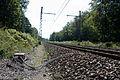 Halte Fontainebleau - Forêt IMG 8525.jpg
