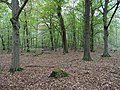 Hambach forest 64.jpg