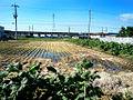 Harima-town farmland.JPG
