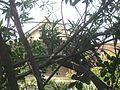 Hermitage, Pasadena, CA 03.JPG
