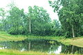 Hickory Woods Park Pond, Pittsfield Township, Michigan.JPG
