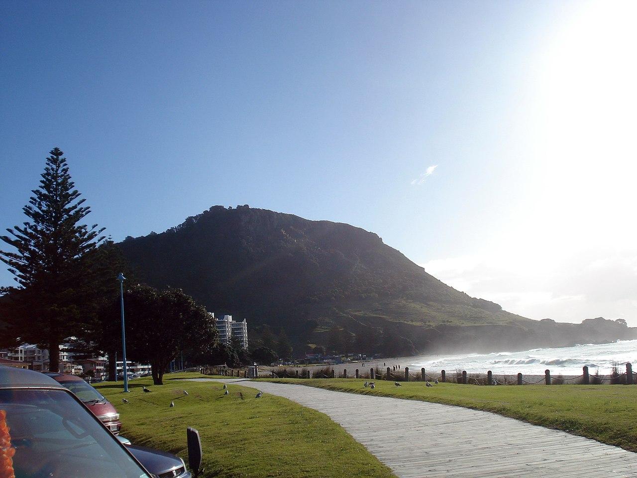 SEO Tauranga