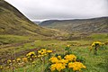 Highlands bei Glenshee, Devil s Elbow (37729428145).jpg