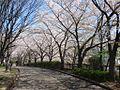 Hikinomichi.jpg