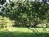 Holly Farm Meadow, Wendling
