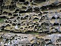 Honeycomb weathering (Black Hand Sandstone, Lower Mississippian; Picnic Rock, Black Hand Gorge, Ohio, USA) 2.jpg