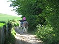 Horse rider on North Downs Way - geograph.org.uk - 1301399.jpg