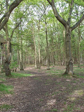 Horsell Common - Horsell Common