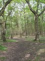 Horsell Common woodland - geograph.org.uk - 168427.jpg