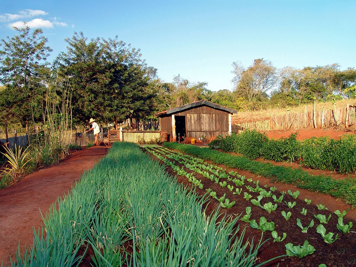 Horticultura wikipedia la enciclopedia libre for Que es la asociacion de cultivos