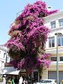 Hotel Metropole and bougainvillea (7703783752).jpg
