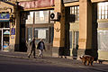 Hungary, budapest, downtown-dog walking the street anker.jpg