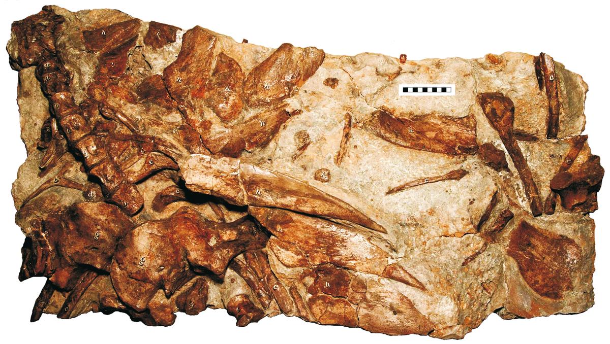 Resultado de imagen de hylaeosaurus