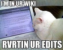 Lolcat Wikipedia Wolna Encyklopedia