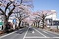 Ibaraki Prefectural Route-293 10.jpg