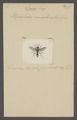 Icaria - Print - Iconographia Zoologica - Special Collections University of Amsterdam - UBAINV0274 044 03 0004.tif