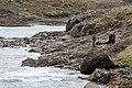 Iceland 2008-05-24 (2545424111).jpg