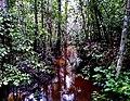Igarapé Manacapuru, Amazonas.jpg