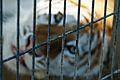Igualdad Animal - 3942 (7139060807).jpg