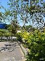 Iguape - SP - panoramio (190).jpg