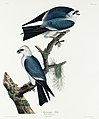 Illustration from Birds of America (1827) by John James Audubon, digitally enhanced by rawpixel-com 117.jpg