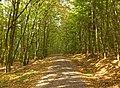 Im Wald bei Sechsthal.jpg