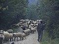 In Transylvania Romania (22600076358).jpg