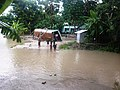In front of Karpara Primary School - panoramio.jpg
