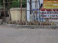 India - Chennai - Ganesh Chaturthi 6 (3059524128).jpg