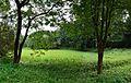 Indian Botanic Garden - Howrah 2013-10-27 3975-3977.JPG