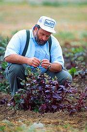A geneticist evaluates sugar beet plants for resistance to the fungal disease Rhizoctonia root rot.