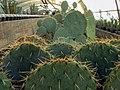 "Iran-qom-Cactus-The greenhouse of the thorn world گلخانه کاکتوس ""دنیای خار"" در روستای مبارک آباد قم- ایران 16.jpg"